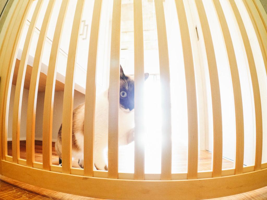 犬猫たちのケージやトイレを置く部屋のイメージ
