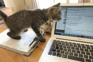 ブログを書いているときにキジトラ猫のろくが来た