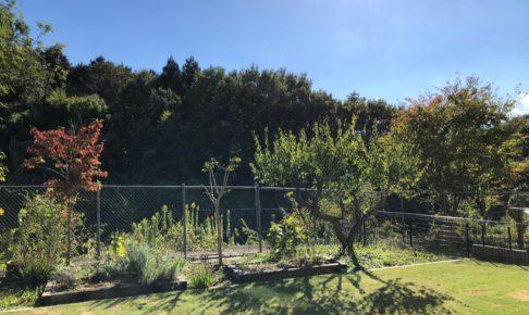 前年の剪定の影響で枝が多く密集した2018年秋