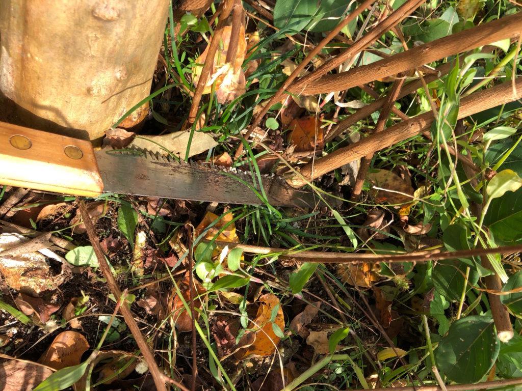 太い枝やひこばえは園芸用ノコギリを使う