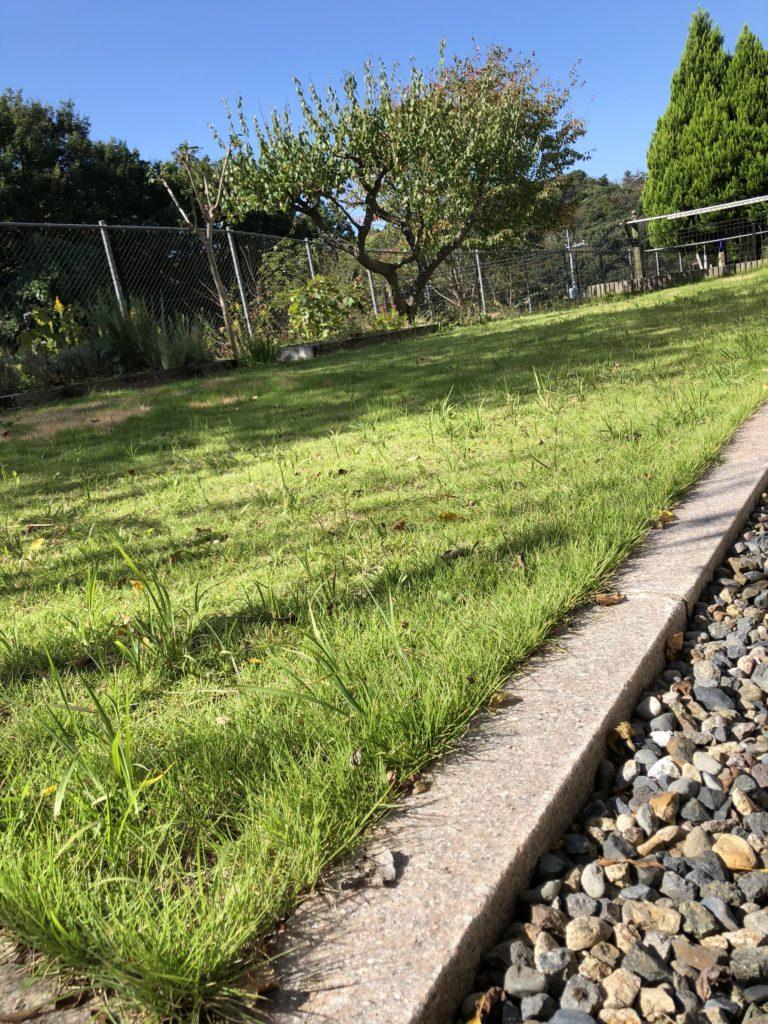 (Before)芝が伸び雑草が目立つ芝生 東側から撮影