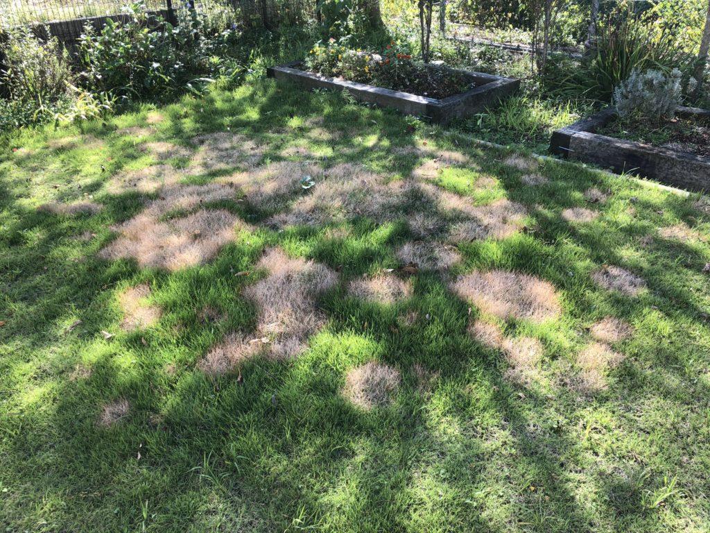 一部が枯れてしまった芝