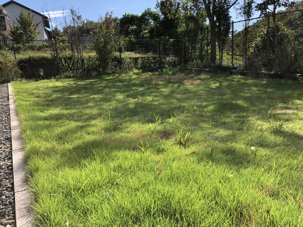 (Before)芝が伸び雑草が目立つ芝生 西側から撮影