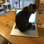 MacBook Airを操作する猫