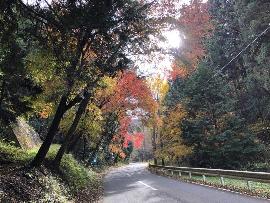 県道274号線の紅葉