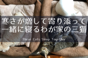 寒さが増して寄り添って一緒に寝るわが家の三猫