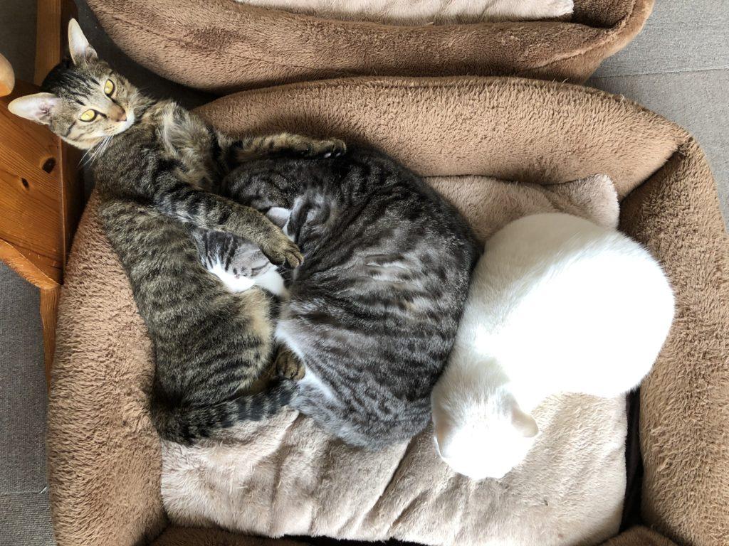 いつの間にかろくも加わって3猫で寝ていました